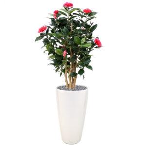 Umělá rostlina Camellia DeLuxe (100cm) – růžová