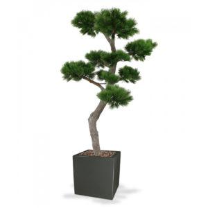 Umělý strom Pinie Bonsai XL (200cm)