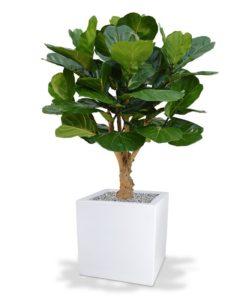 Umělý strom Fikus Lyrata DeLuxe (130cm)