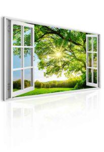 Obraz okno obrovský strom