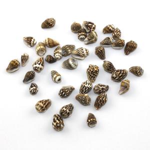 Mušle – pískově hnědá – cca 15 x 7 x 7 mm – 1 ks