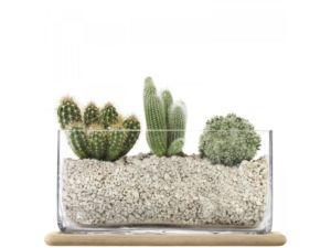 Obdélníkový skleněný květináč LSA Plant 19,5 cm