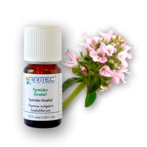 Tymián linalol (Thymus vulgaris linaloriferum)