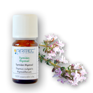 Tymián thymol (Thymus vulgaris L.)