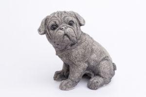Puppy n.5